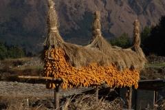 2014.01.08_09_Kathmandu_-_Beni_-_Kalopani_2__55_von_70_