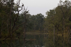 2014.01.20_Chitwan_National_Park__2___82_von_93_